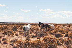 Carnet de voyage : Argentine