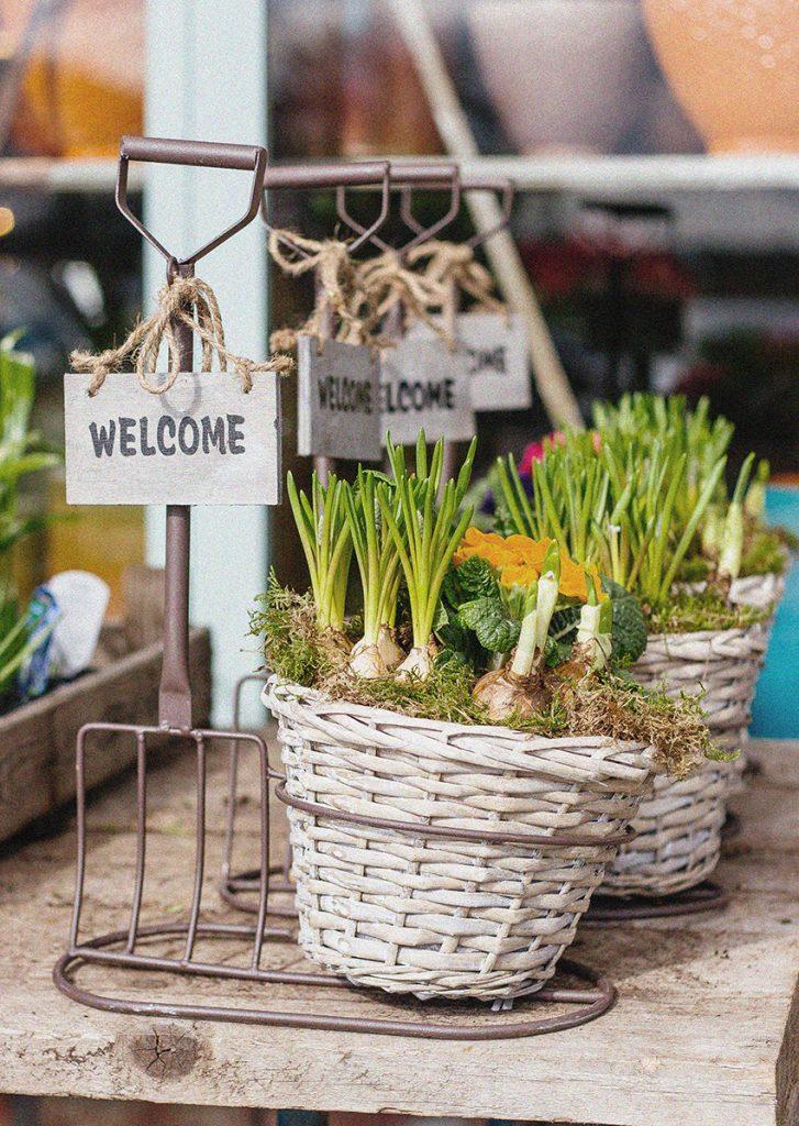 Plantes et bulbes sur le marché