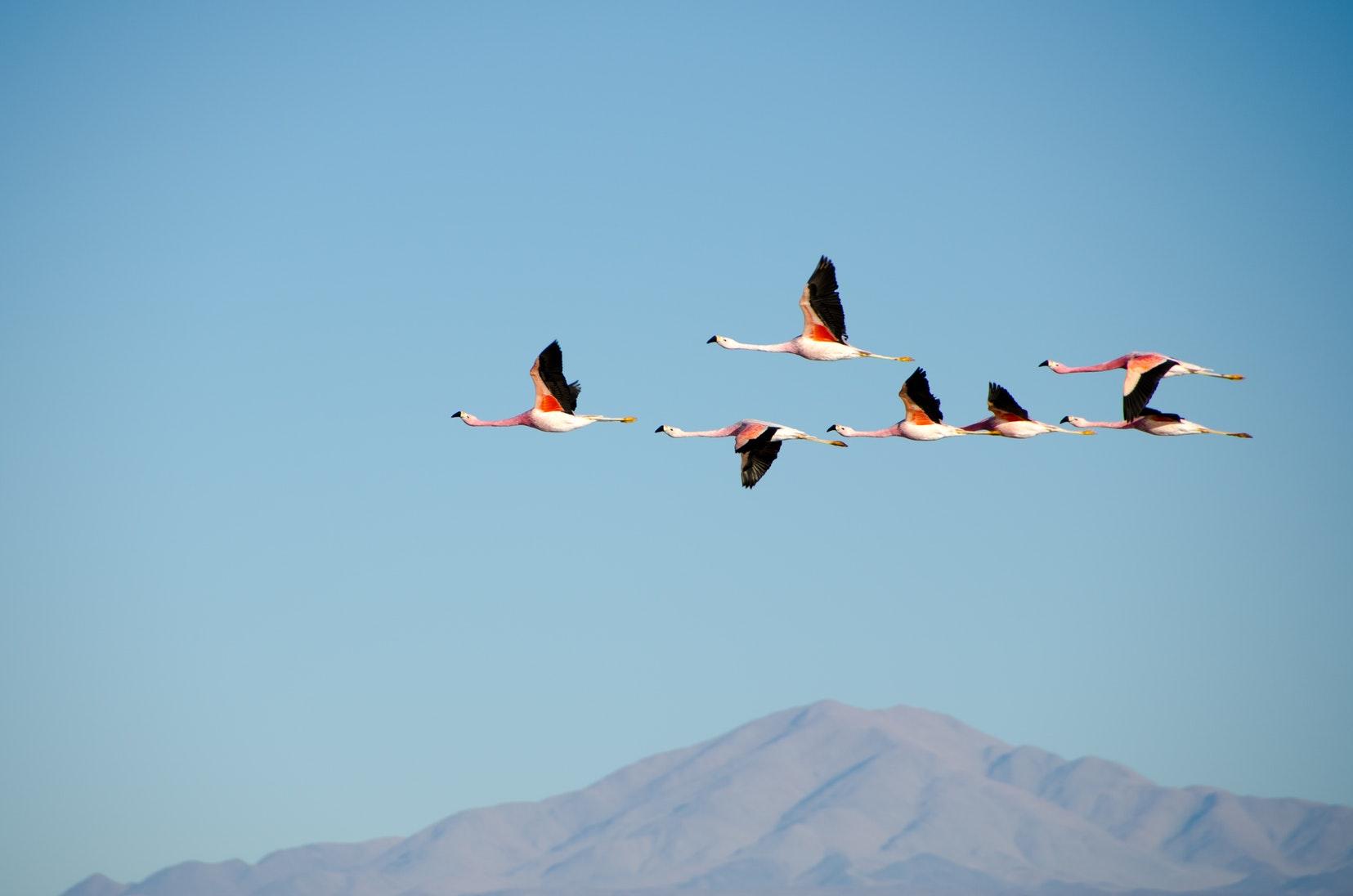 Carnet de voyage : d'Atacama à Uyuni